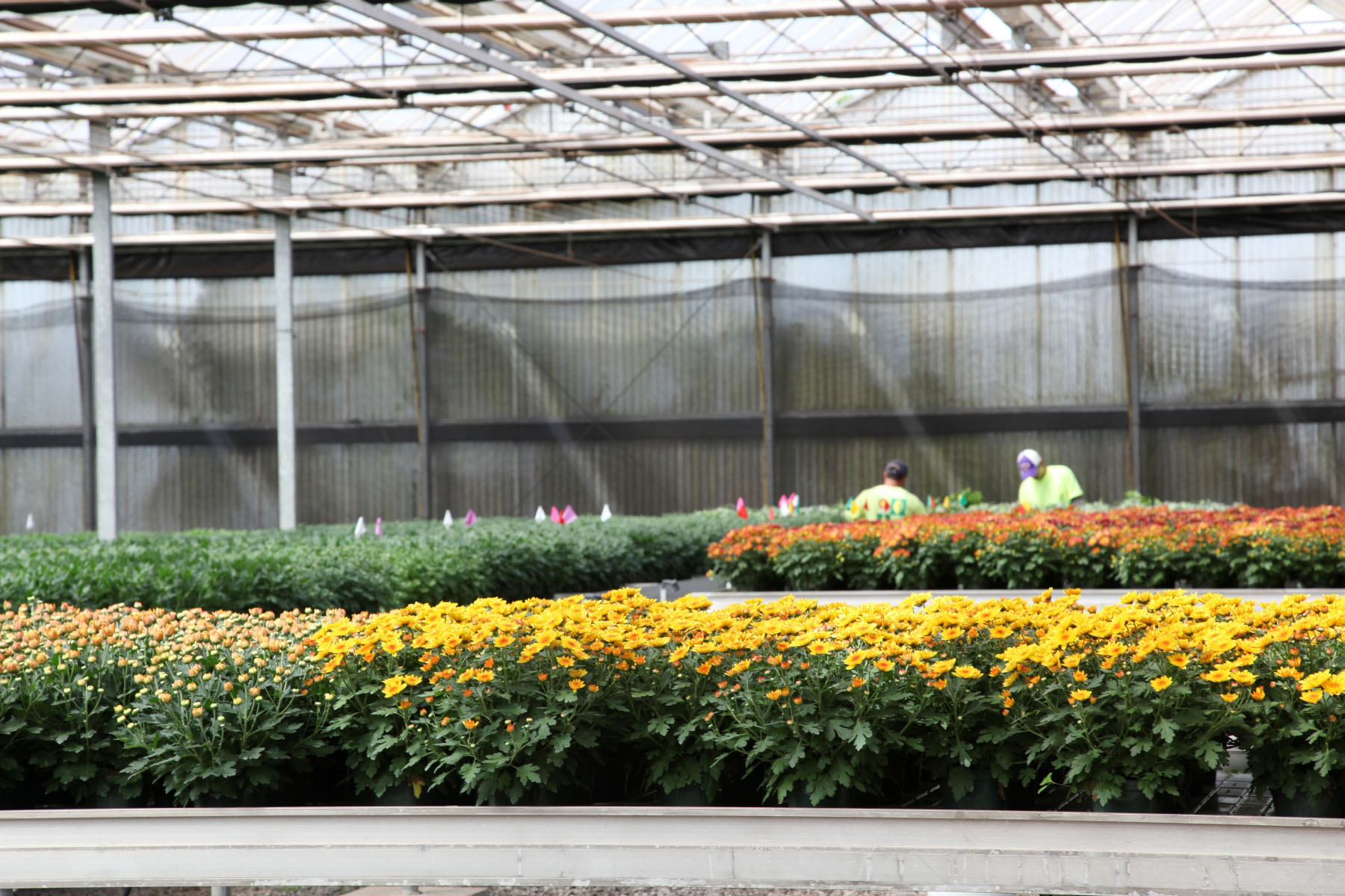 Regional Agricultural Show Development Grants Program