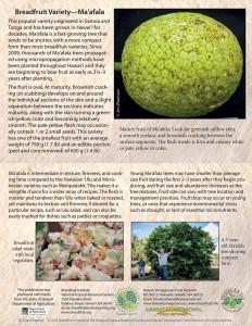 Breadfruit-variety-Maafala-card