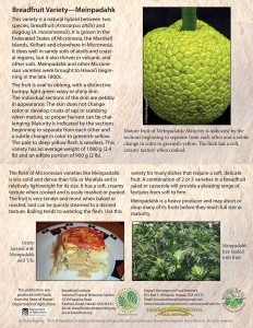 Breadfruit-variety-Meinpadahk-card
