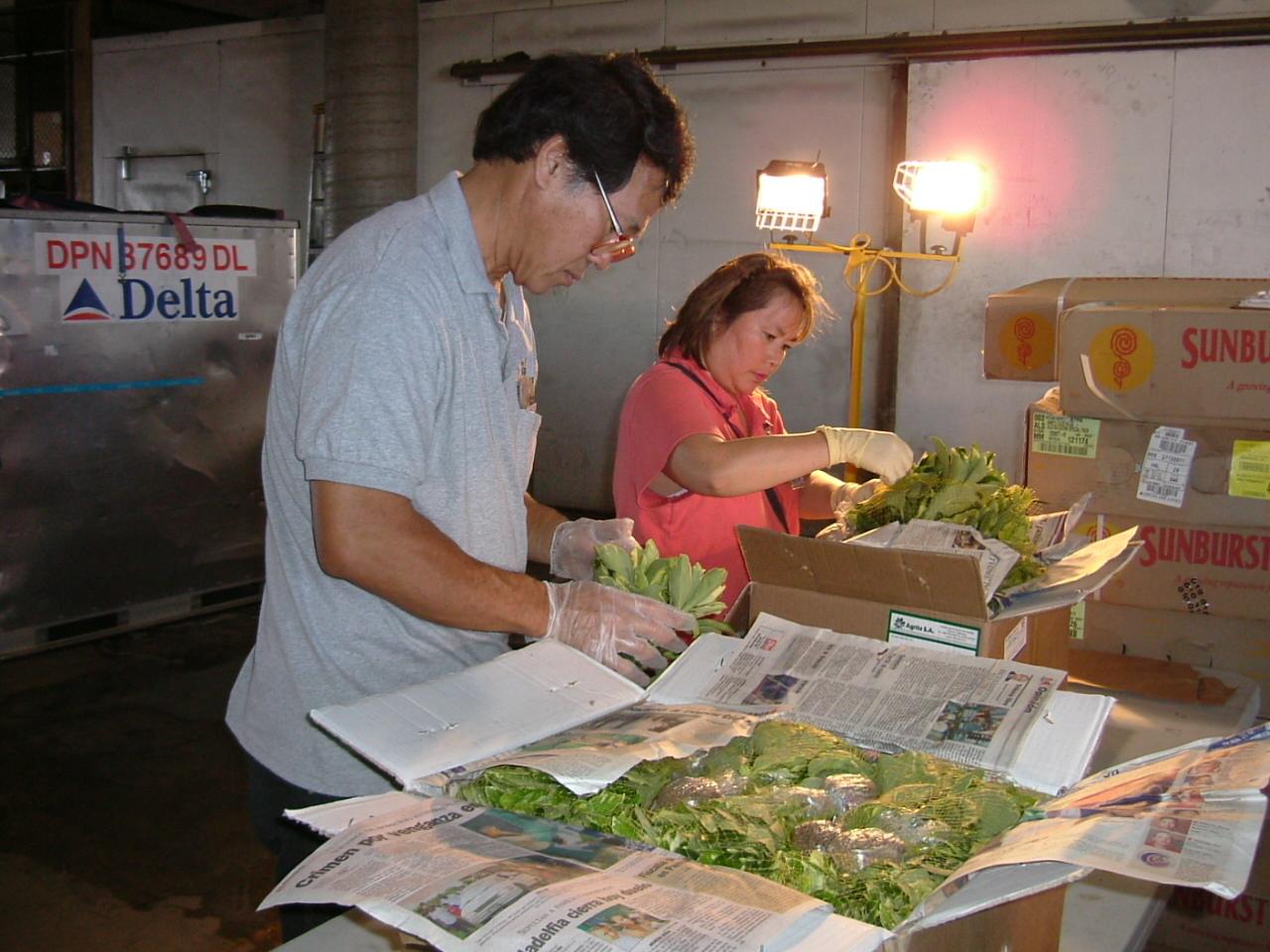 Inspecting ornamental plants.