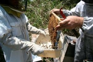 Bees - Clare & Kona Beekeeper 4-07