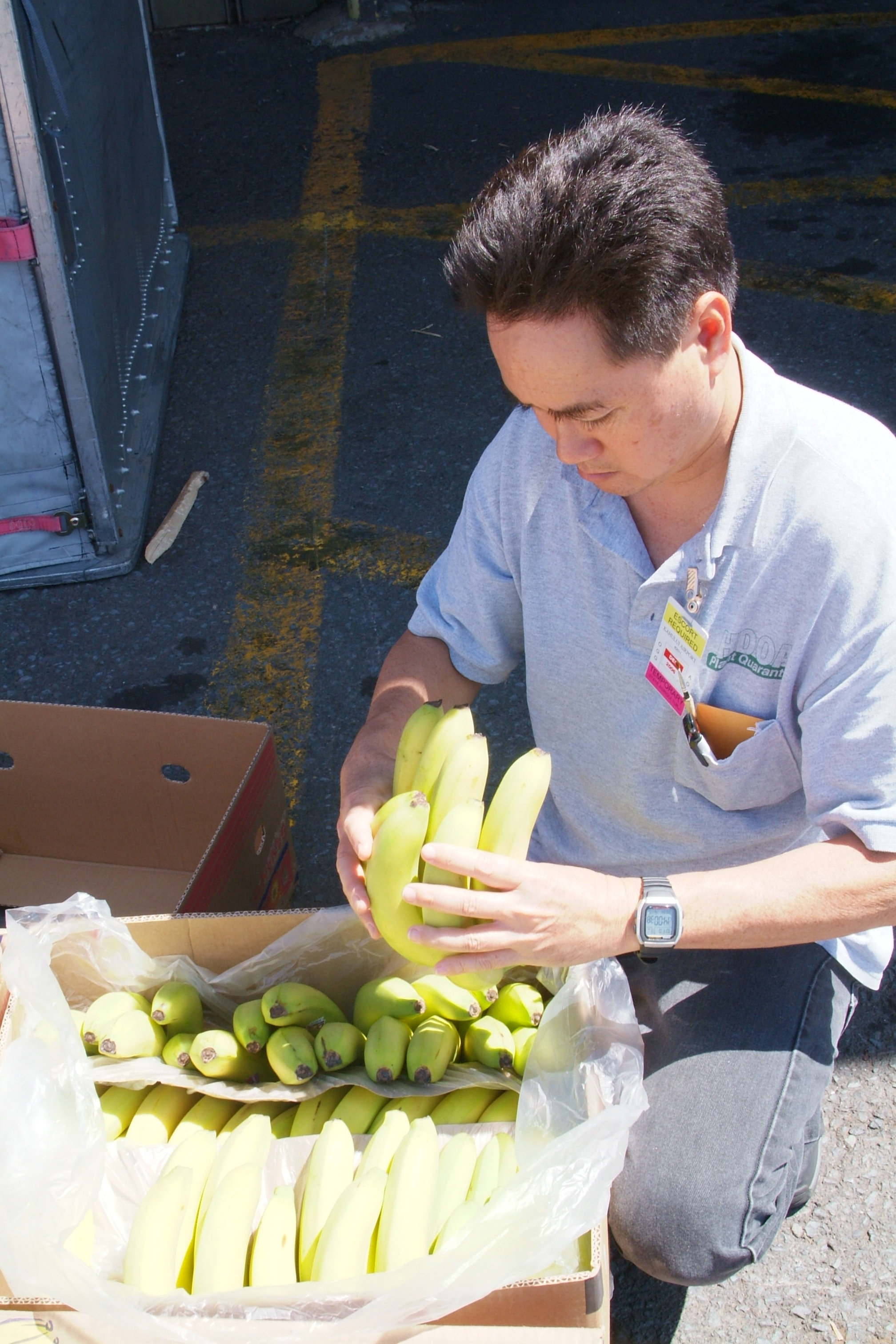 Inspecting imported produce.
