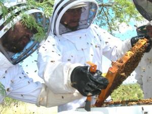 DSCN4974 MR_MF examining bee frame_RH photo_cr