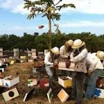 image of beekeepers outside