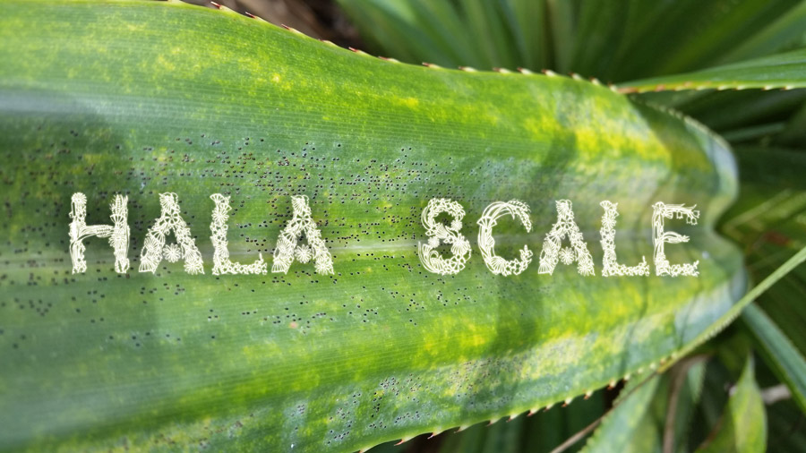 "Picture of a leave with words ""Hala Scale"""