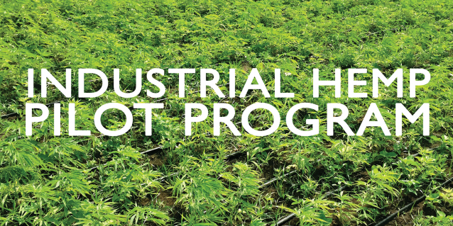 Picture of hemp fields with text