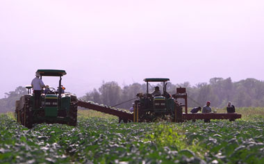 Photo of a tractor and workers in a field.