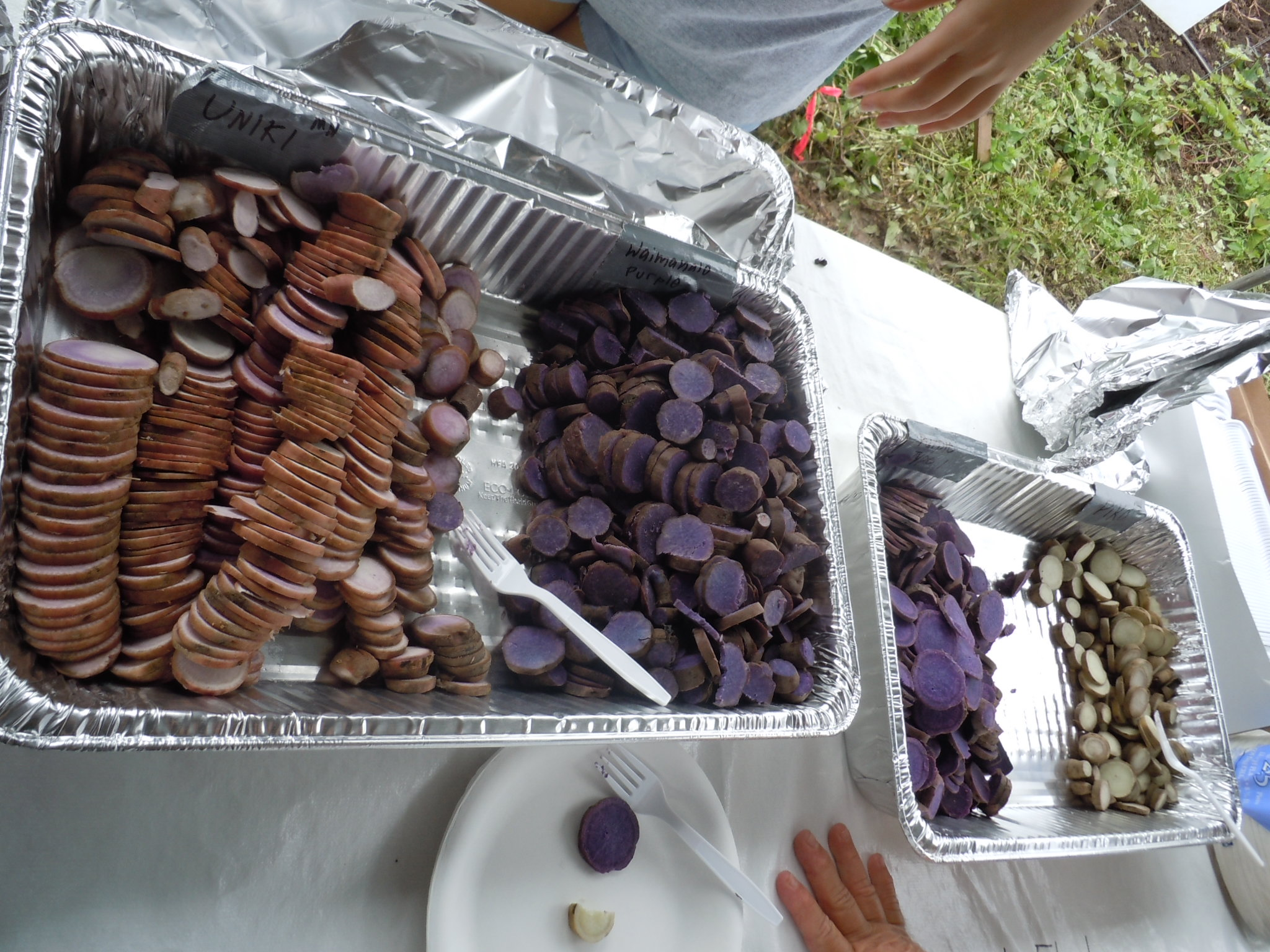 Department of agriculture sweet potato field day in waimanalo