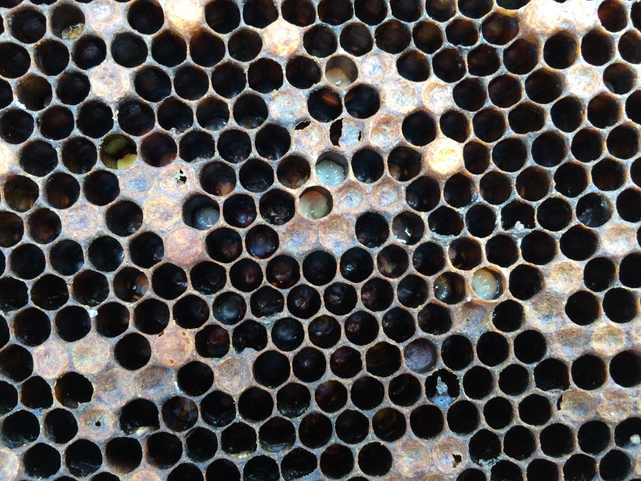 Hive with AFB