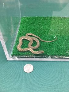 captured snake