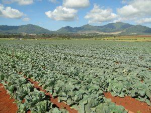 Kelena Farms Whitmore Project photo