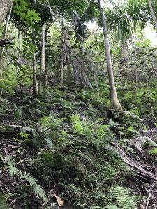 Infestation terrain